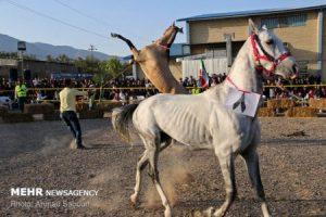 جشنواره ملی اسب