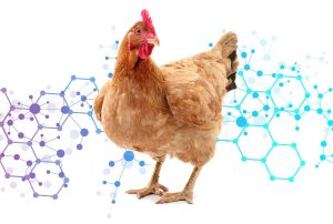 Probiotic-in-Poultry