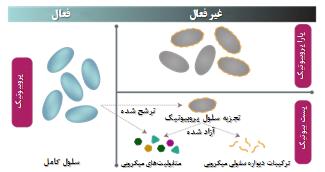 Probiotic pic 3