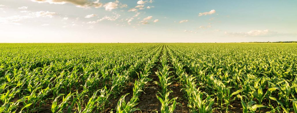 corn-banner