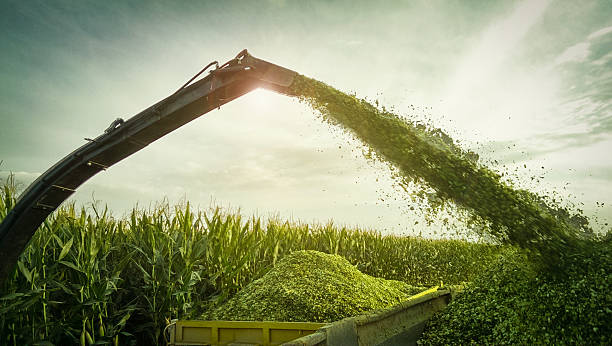 Silage photo